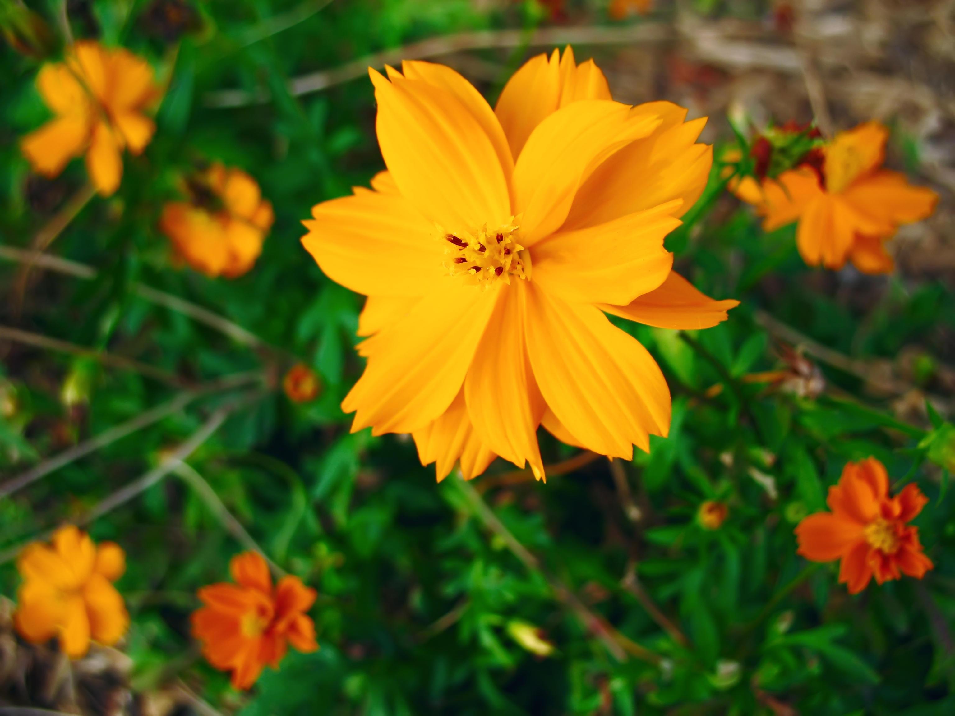 Orange Flowers 4 By Richardxthripp On Deviantart