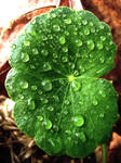 Leafy Droplets Stock