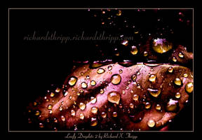 Leafy Droplets 2 by richardxthripp