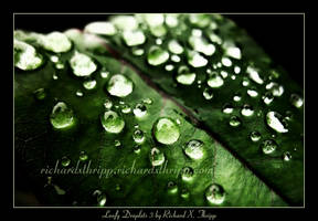 Leafy Droplets 3 by richardxthripp
