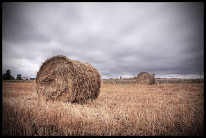 Straw yellow summer by Soczi