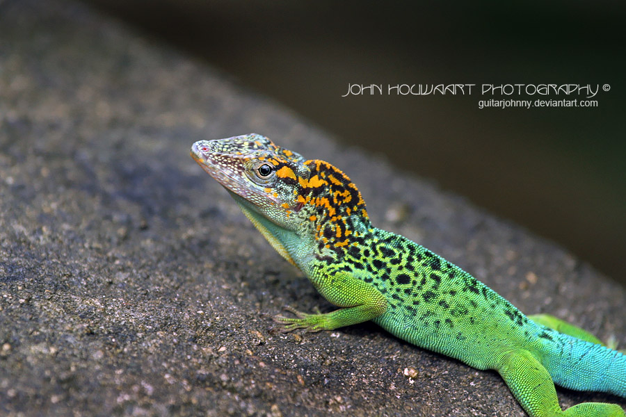 Reptiles Amphibians and Invertebrates by guitarjohnny on ...
