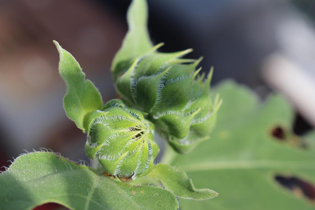 Sunny Bud by Flower-of-Art