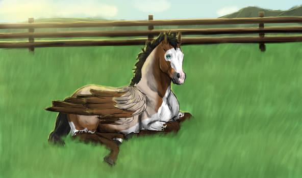 A Foal's Bliss