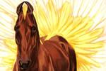 Kuda Pariso