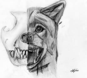 Half skull, half wolf