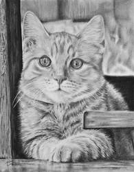 Kitty by kornrad