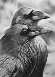 Ravens by kornrad