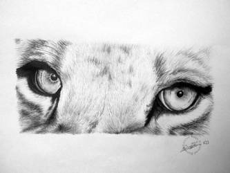 Eyes of lions by kornrad