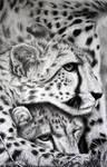 Cheetahs by kornrad