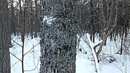 Random shot in the woods