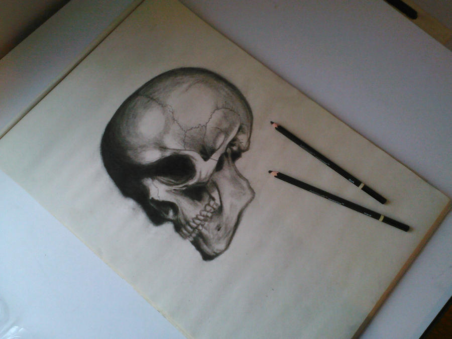 charcoal skull by AlexisM96