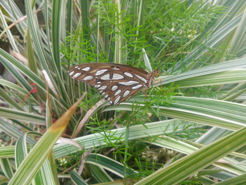 Mariposa - Butterfly by dok-k
