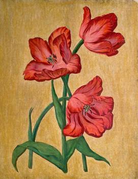 Vintage Fringe Tulips