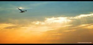 Bird in sky 1 by fifoux