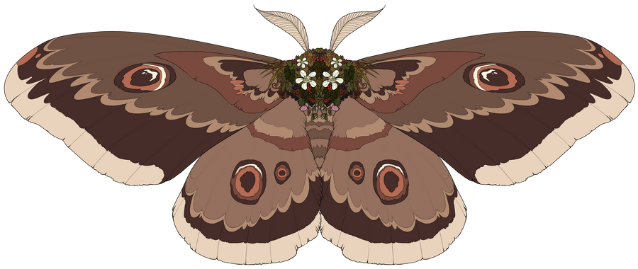 bramblemoth reference by Lyere