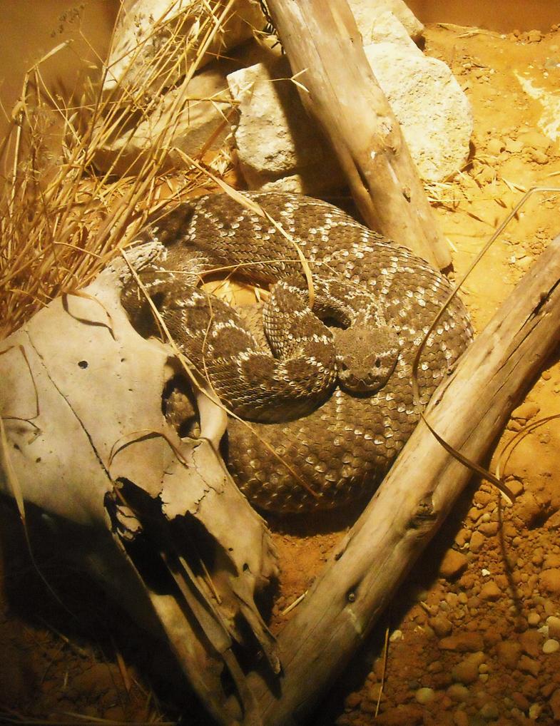Rattlesnake Jake Plush Rattlesnake Jake by