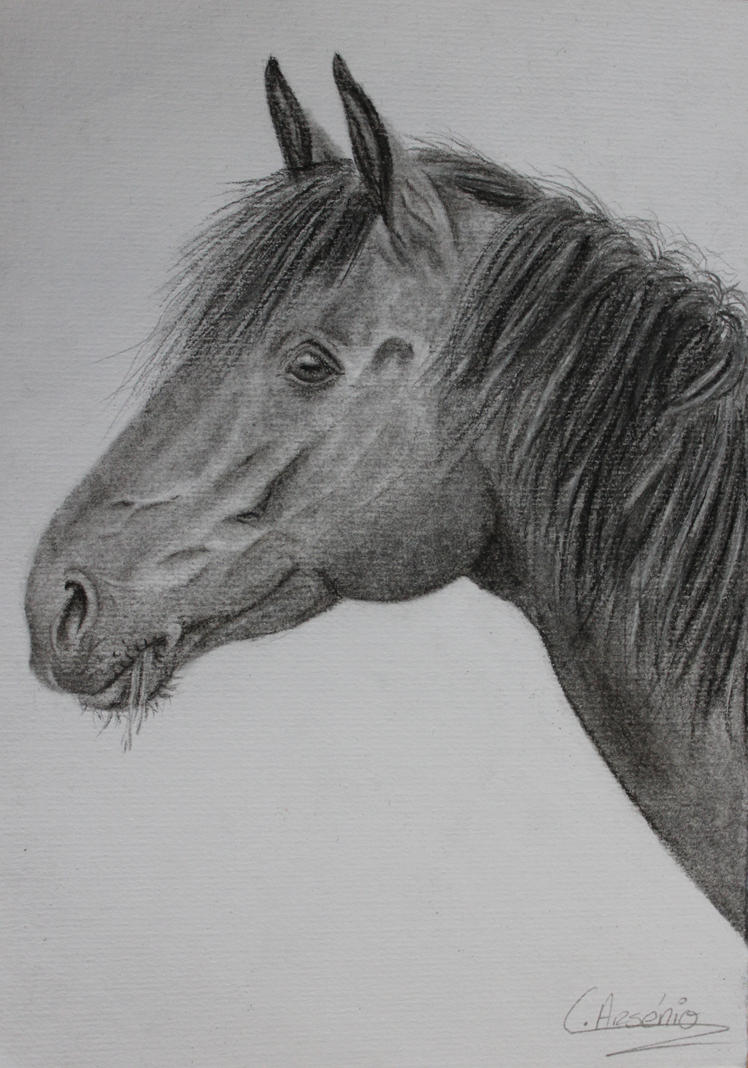 Horse portrait by Katy500