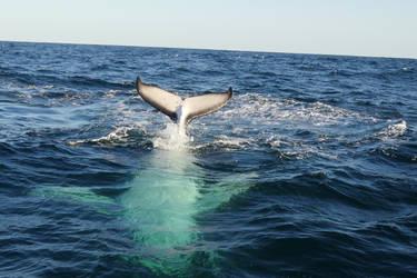 Playful Whale