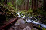 Sol Duc Falls Trail 02 by ThisJourney