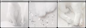 . f2u cat page decor . by lleafeons