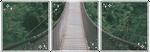 . bridge . by lleafeons