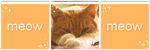 . meow | f2u page decor . by lleafeons