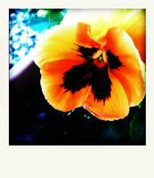 flower by Ch0oky7