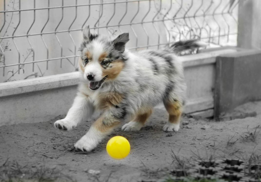 Yellow ball by Landisog