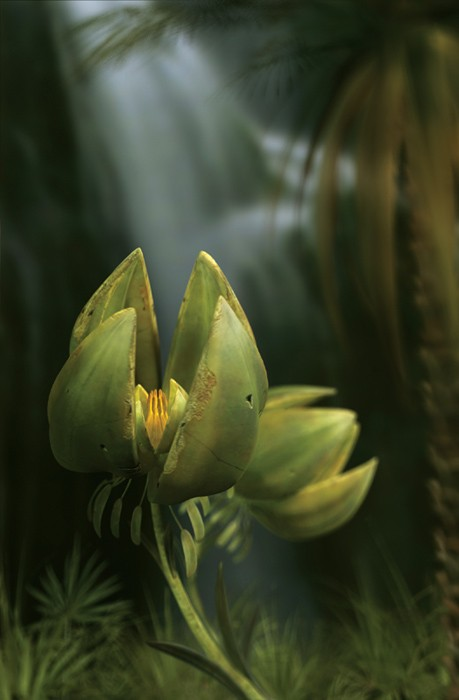 tulip by tzadqiel