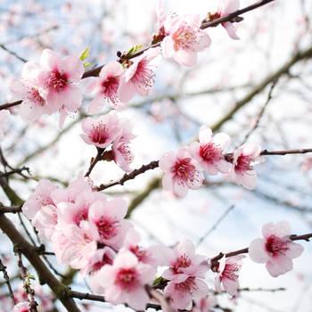 Flores by elminino