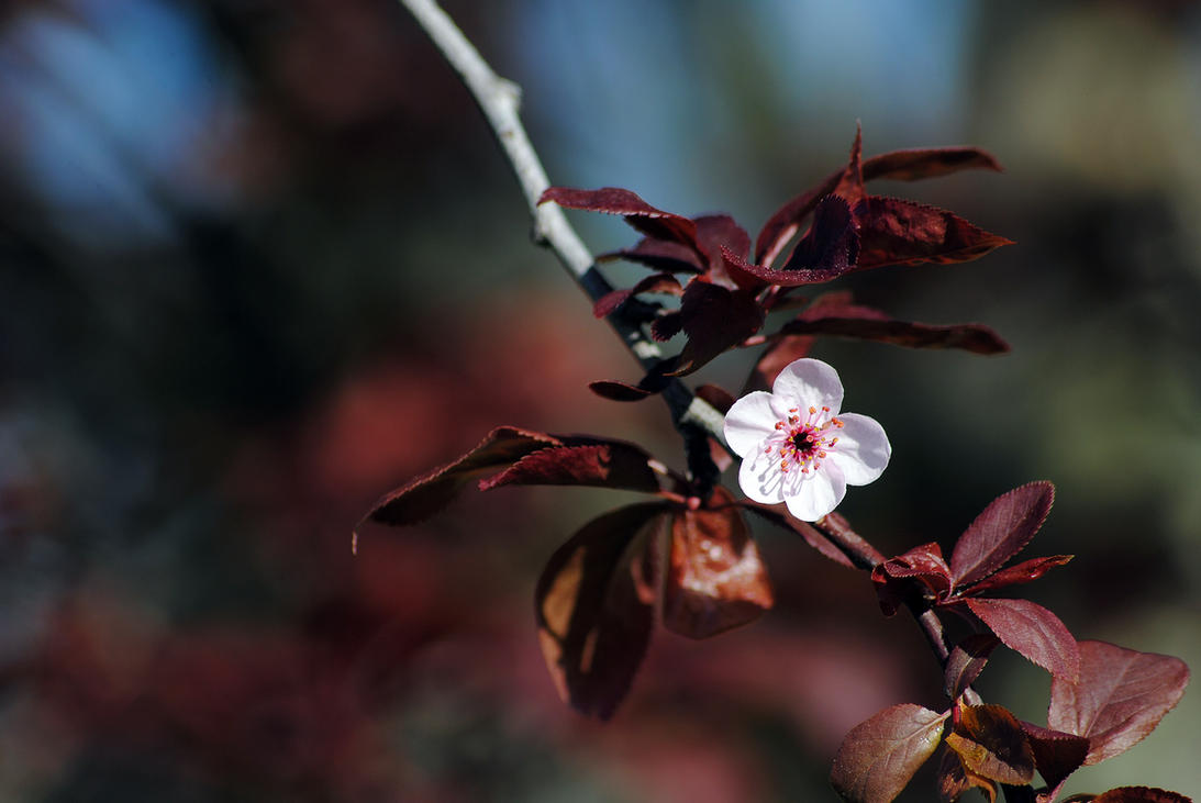 Flor by elminino
