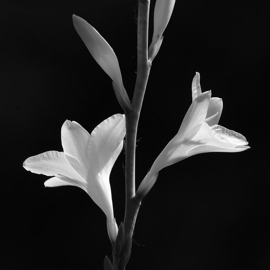 Flores blancas by elminino on DeviantArt