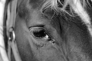 Ojo caballo byn