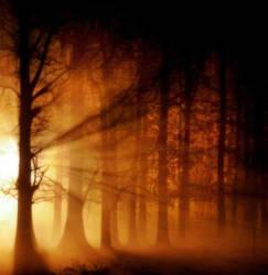 magia del bosco by Laysa