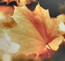 Autumn by Laysa