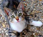 Meow*-*