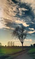 My tree by Laysa