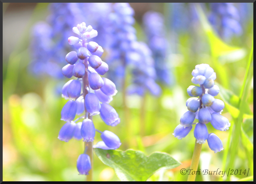 Blue Bells I by WorldWar-Tori