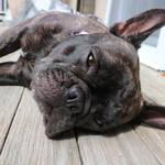 Doggie Pals by pupstime