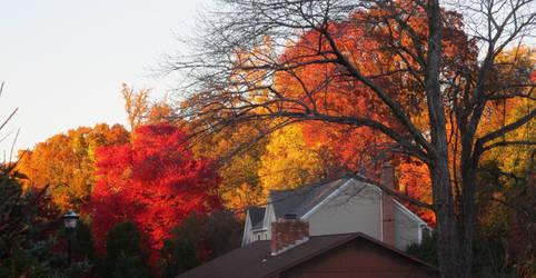 Backyards On Fire by body-electric