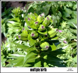 Multiple Birth by LilyNBlue