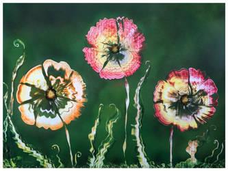 The Flower Series - II by rahulmukerji