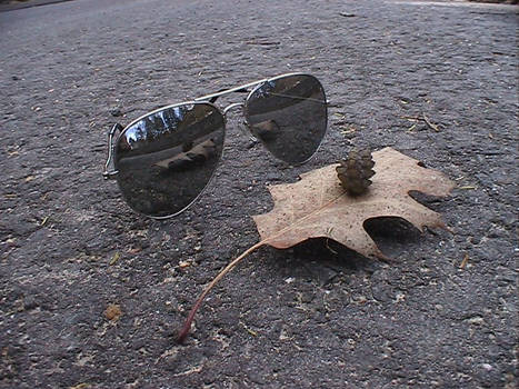 An Acorn And It's Mirror