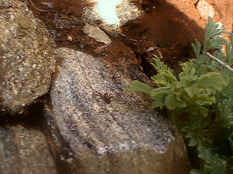 Spider on a Rock