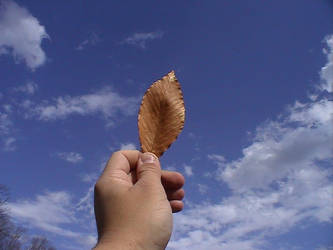 A Leaf in the Sky