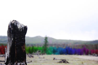 Everrainbow Trees