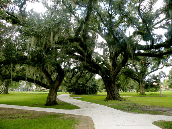 New orleans city park 06 by nevertakemystock on deviantart for New orleans city park sculpture garden