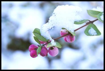 wintershooting Part 12 by CKJohnson