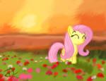 Field of Fluttershy